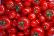 کاهش قیمت گوجهفرنگی به دی ماه موکول شد